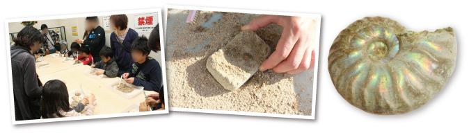 本物の化石発掘!